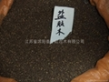 扁柏種子側柏種子 2