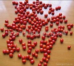 红豆种子 枫树种子