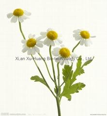 Chrysanthemum indicum P.E.10:1 test by TLC