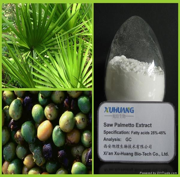 Saw Palmetto Extract 1