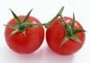 Hot!! stock canned tomato paste looking