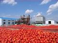 sauce tomato 28-30 manufacture of tomato