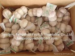 Fengshuo Garlic