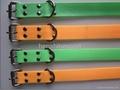 Fluorescent dog collar