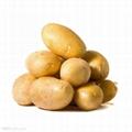 yellow potato 1