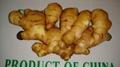 air dry ginger