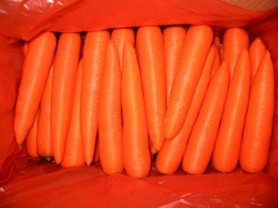 速冻胡萝卜 2