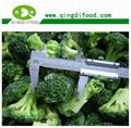 IQF broccoli  2