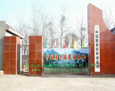 麝香批发 - 产品目录 - 河北省 - 中国麝香鼠养殖基地