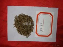 多花木蘭種子
