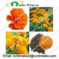 Marigold Extract with lutein 5% to 98%