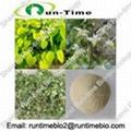 Epimedium Sagittatum Extract with