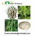 white kidney bean extract powder with Phaseolin 1% 2% 1