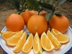 gannan orange