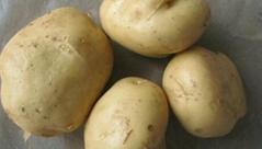 马铃薯种子早大白