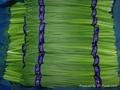 Supply China exports Fresh Garlic Sprout