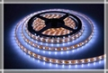 5050 LED ROPE LIGHT 12v (60 LED/Metre)