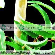 Eucalyptus Oil  1