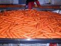 鲜冷胡萝卜 Fresh carrot 2
