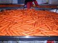 2012中国新鲜胡萝卜 FRE