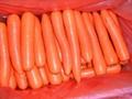 2012中国新鲜胡萝卜 FRESH CARROT 2