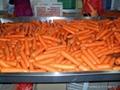 明亮红胡萝卜CARROT 3