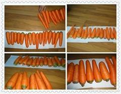 2012胡萝卜 Carrot
