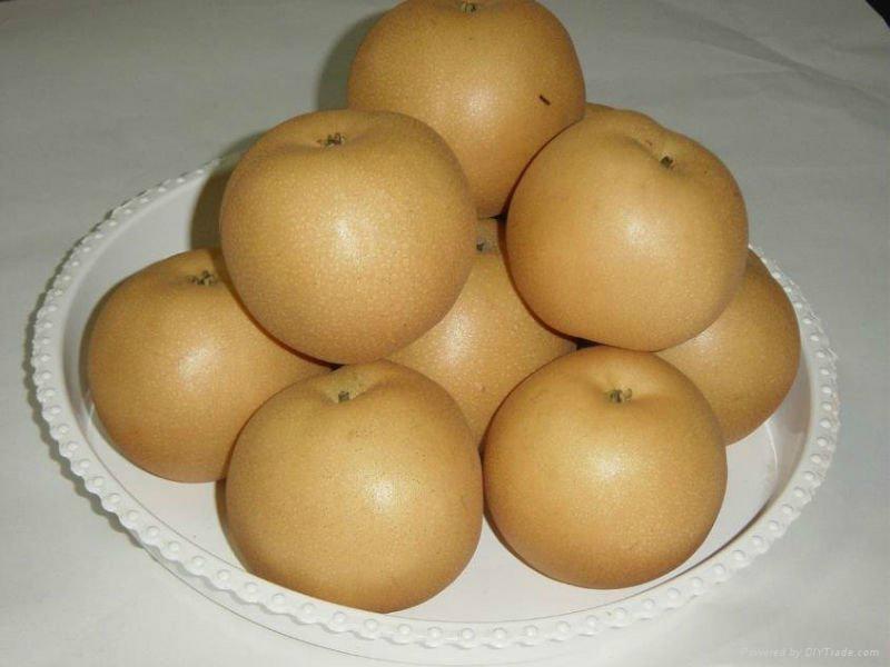 fengshui pear  1