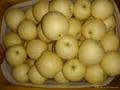 crown pear  1