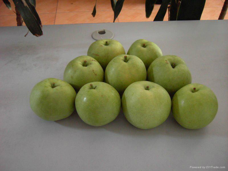 emreald pear  1
