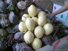 zao su pear