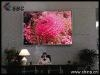 indoor led display (P7.62mm)