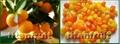 Dried Kumquats 5