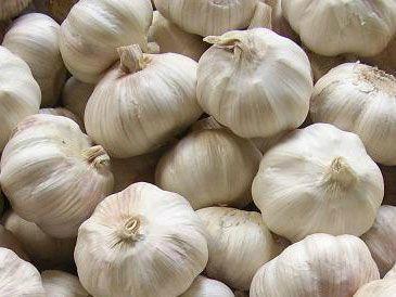 Garlic extract 1