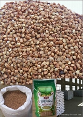 chinese buckwheat kernel factory    2012
