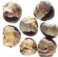 Horse Chesnut Extract