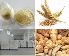 Bread Wheat Protein