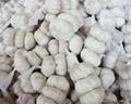fresh red garlic 5