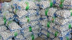 20kg/mesh bag