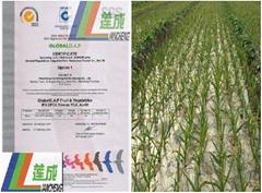 全球良好农业操作认证
