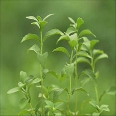 Steviosides Stevia Extract