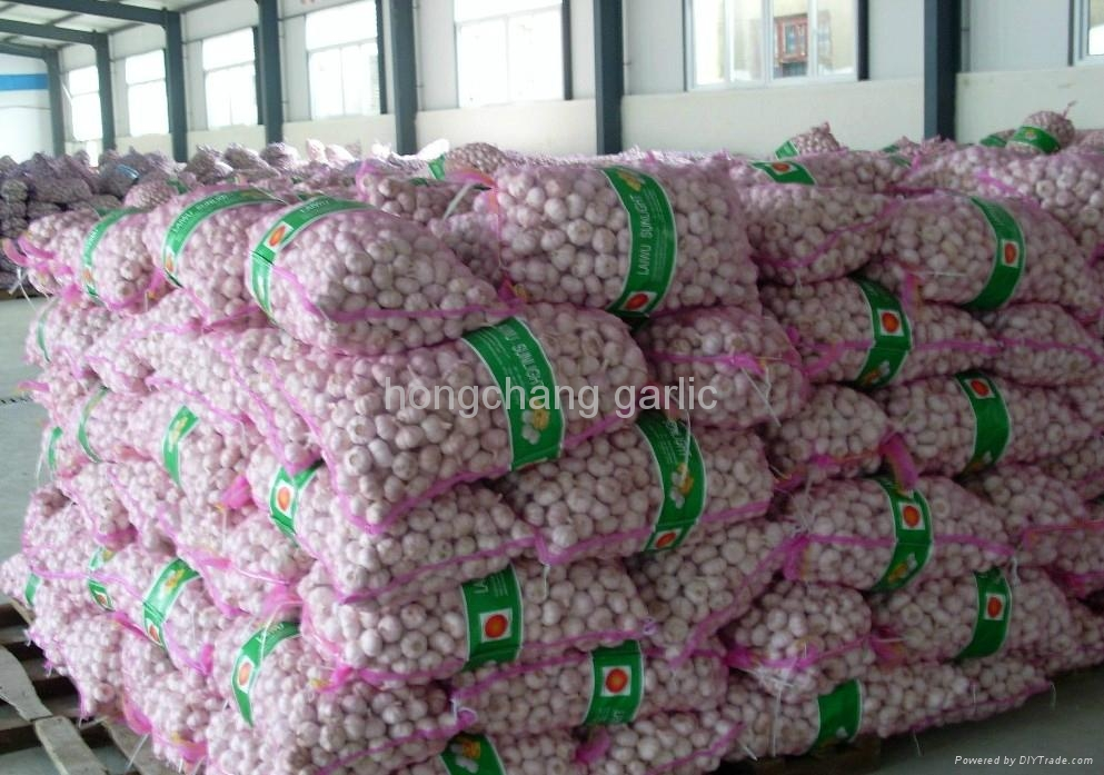 fresh pure white garlic 2