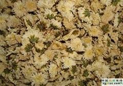 Florists Chrysanthemum