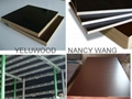 phenolic glue Film Faced Plywood for construction