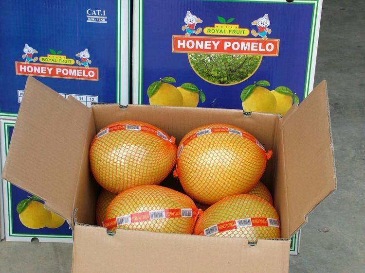 honey pomelo 2