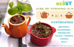 可可香草栽培砂锅