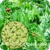 Green coffee bean extract 1