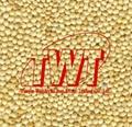 Broomcorn millet 2