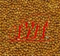 Broomcorn millet 3