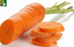 70g-150g new crop carrot